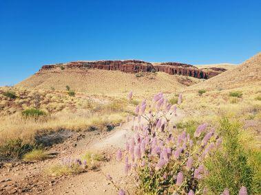 weltreise nocker australien - Millstream National Park_193