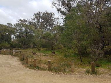 weltreise nocker australien - Region Margaret River_21