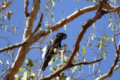weltreise nocker australien - kakadu national park_593