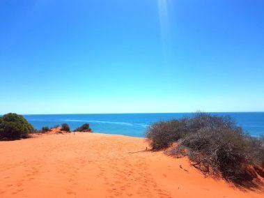 weltreise nocker australien - shark bay_133