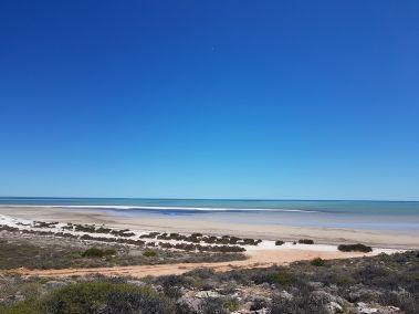 weltreise nocker australien - shark bay_60