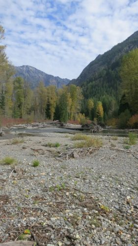 Welcome to the White River, a headwaters of the Wenatchee River watershed.