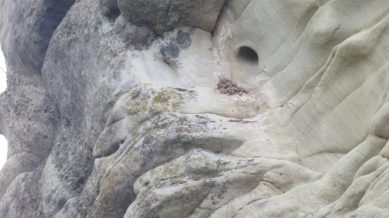 Kelsay points out cavities (this one with evidence of use by birds), that are the result of wind and water weathering, often triggered by a pebble dislodging from an exposed rock layer.