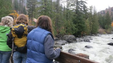 The boulder-moving power of the Icicle River roars below the bridge. We watch an Ameican Dipper flail a small fish, and dowstream, a great blue heron lands on a water-spashed boulder.