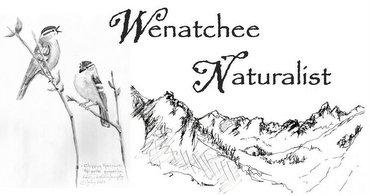 Wenatchee Naturalist logo