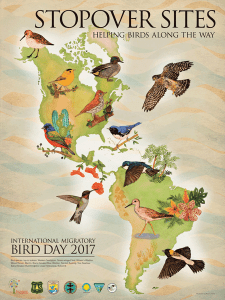 International Migratory Bird Day 2017 poster