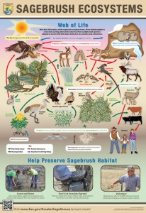 Sagebrush Ecosystems web of life poster