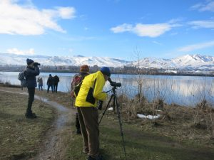 WVC Continuing Education Winter Waterbirds 2016 Class Field Trip