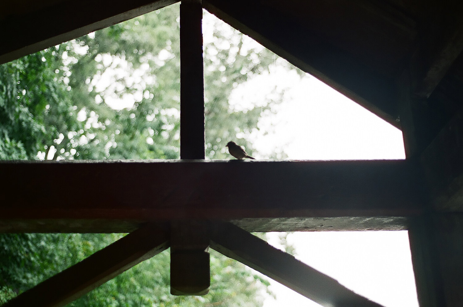sparrow at elopement wedding day photo by wendy g photography