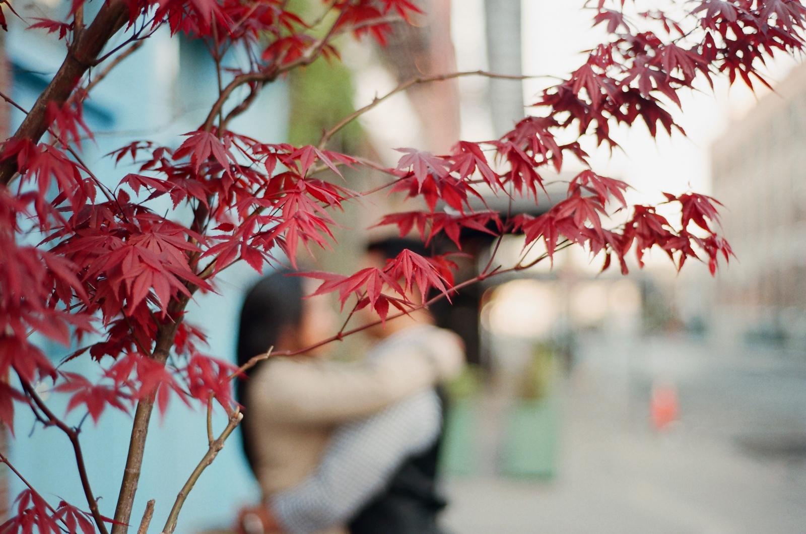 engaged couple kissing behind Japanese maple tree