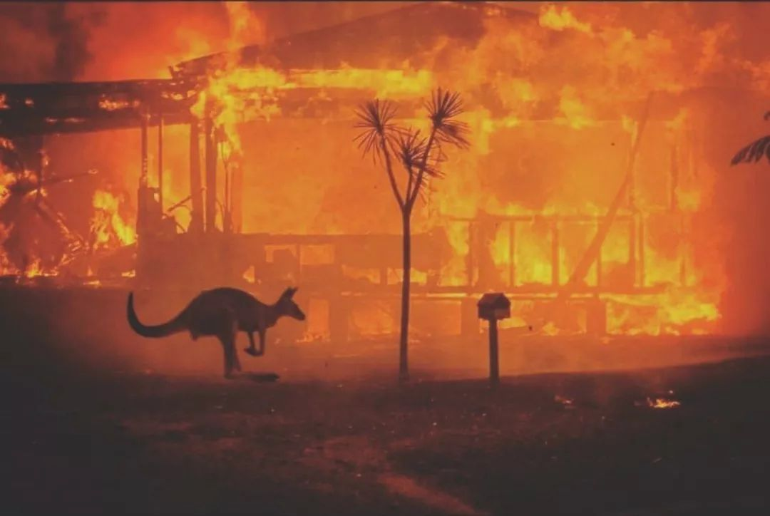 是怎样的愚蠢,才会觉得澳洲这场大火与我无关(图)
