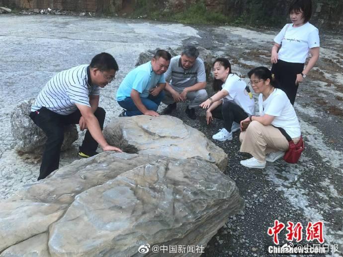 贵州桐梓一工地挖出4.4亿年前古生物化石群