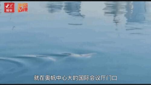 """刚刚!青岛惊现""""海洋精灵"""" 网友:比水族馆好看"""