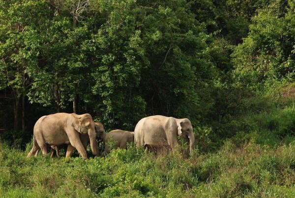 Kui Buri Nationaal Park, Thailand