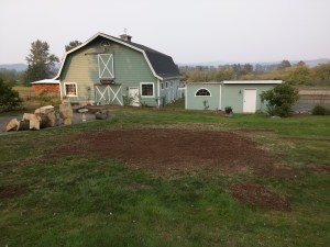 Monroe, WA | tree stump removal- after