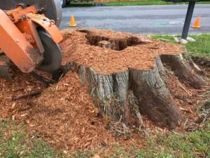 monroe-wa-stump-removal-stump-grinding-11