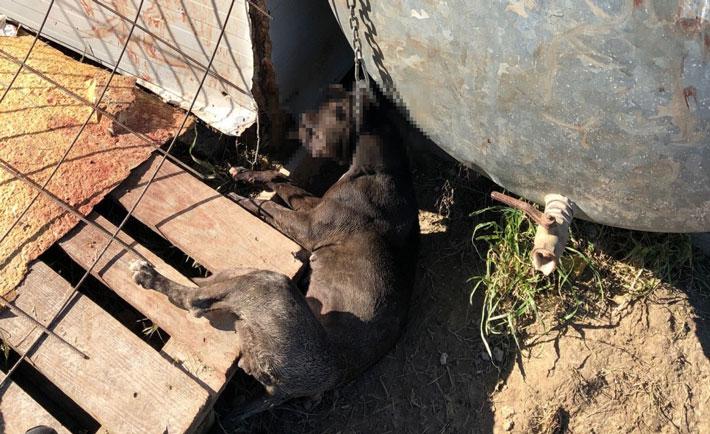 Cane soffocato Isola di Capo Rizzuto