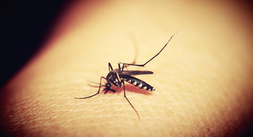zanzara covi 19 coronavirus