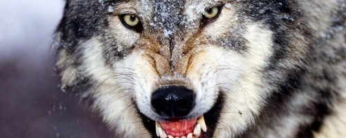 Irish Word Werewolf