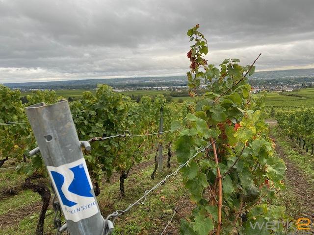 Rheinsteig in der Nähe vom Schloss Vollrads, Winkel im Rheingau