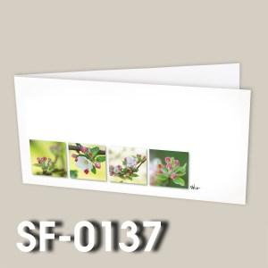 SF-0137