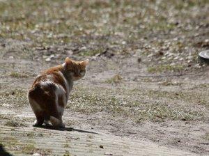 Katzenrückblick