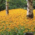 Blumenhügel