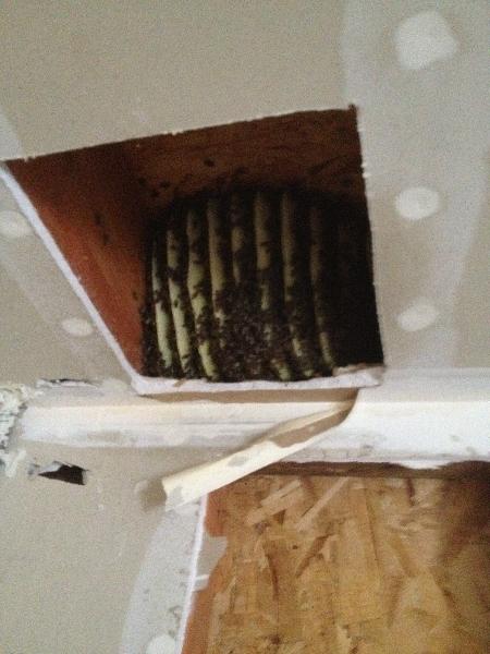 bee photos we save