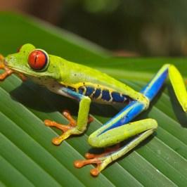 frog-643480