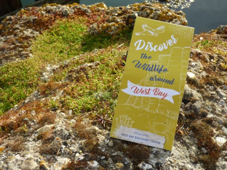 Discover the Wildlife around West Bay - free leaflet