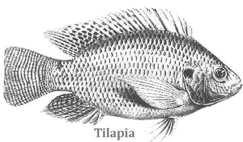 120 Books How to Raise Fish Farming Ponds Aquaculture
