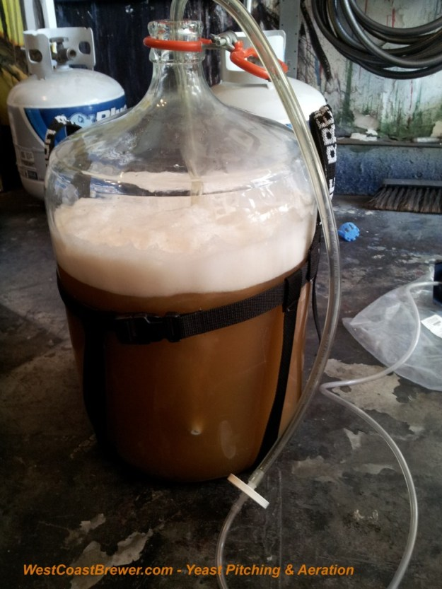 Yeast Pitching and Aeration just prior to fermentation