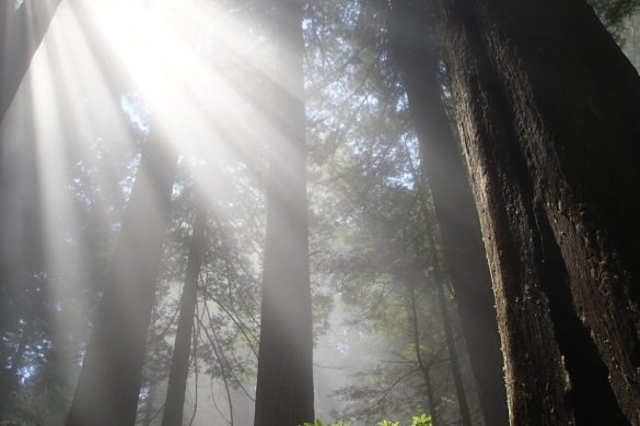 Find Your Park: Redwood National Park