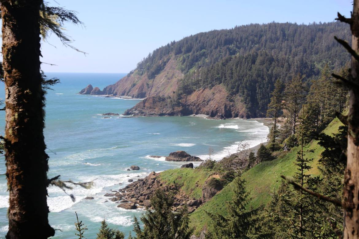 Forested hillside and cliffs above ocean