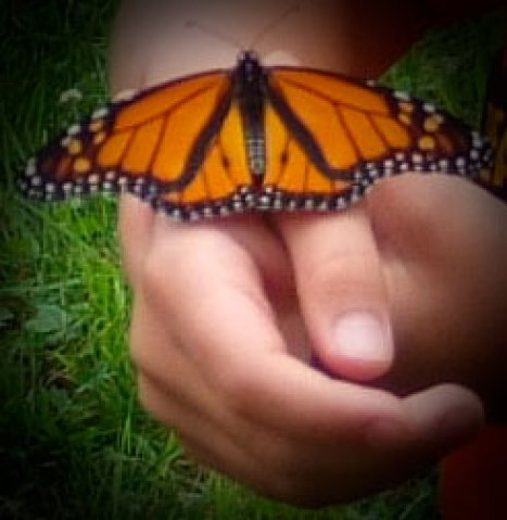 west creek media monarch butterfly on childs hands photo by kay's moment in time, LLC