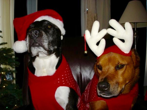 The Dogs of Christmas (#242)