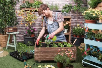 Young man spraying container with tomatoe plants, pepper plants and lettuce in the urban garden