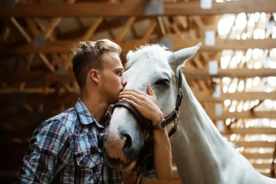 Low angle view of rancher kissing horse in stable