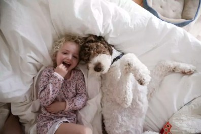 High angle portrait of cheerful girl relaxing with dog on bed at home