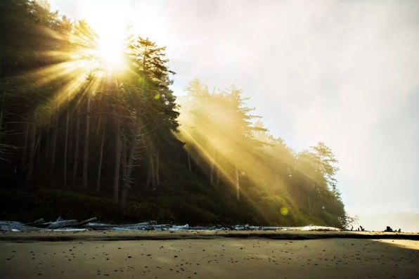 Low angle view of sunlight streaming through trees at beach