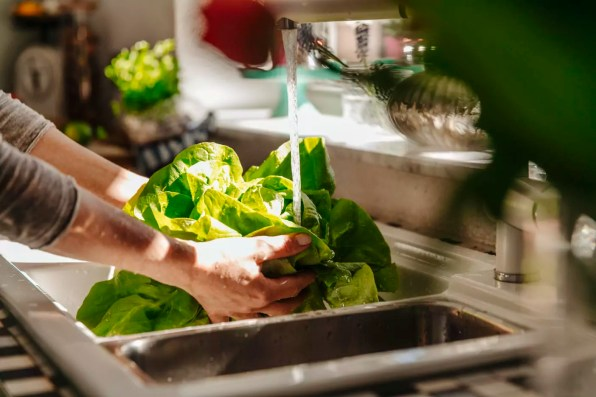 Washing lettuce in kitchen