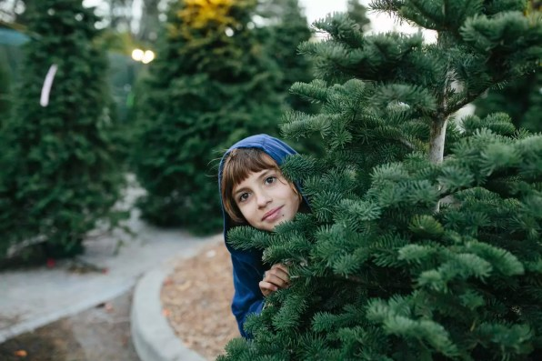 Portrait of cute girl standing by pine tree at farm during Christmas