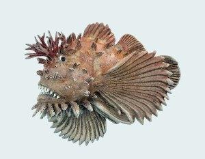 BennettScorpionfish - BennettScorpionfish
