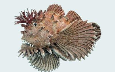 BennettScorpionfish - Past Exhibits