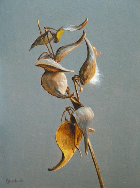 """Thomas S. Buechner """"Milkweed Pods"""" 14x10 oil $2,570. framed"""