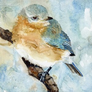 FaisSpringWeddingBabyBluebird - FaisSpringWeddingBabyBluebird