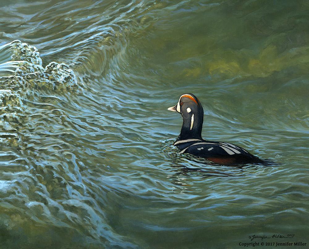 """Jennifer Miller """"Endless Tide"""" (Harlequin Duck) 11x14 oil $1,000. SOLD"""
