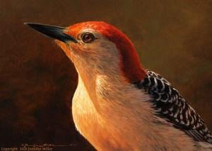 """Jennifer Miller """"Mr. Chuff"""" (Red-Bellied Woodpecker) 5x7 oil $375. SOLD"""