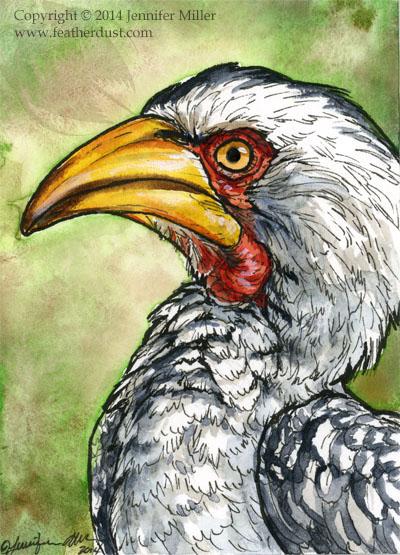 "Jennifer Miller ""Southern Yellow-Billed Hornbill"" 3.5x2.5 ink/watercolor matted/unframed $50."