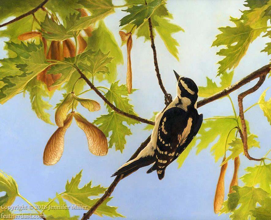 """Jennifer Miller """"Wings of Spring - Downy Woodpecker"""" 11x14 oil $1,200."""